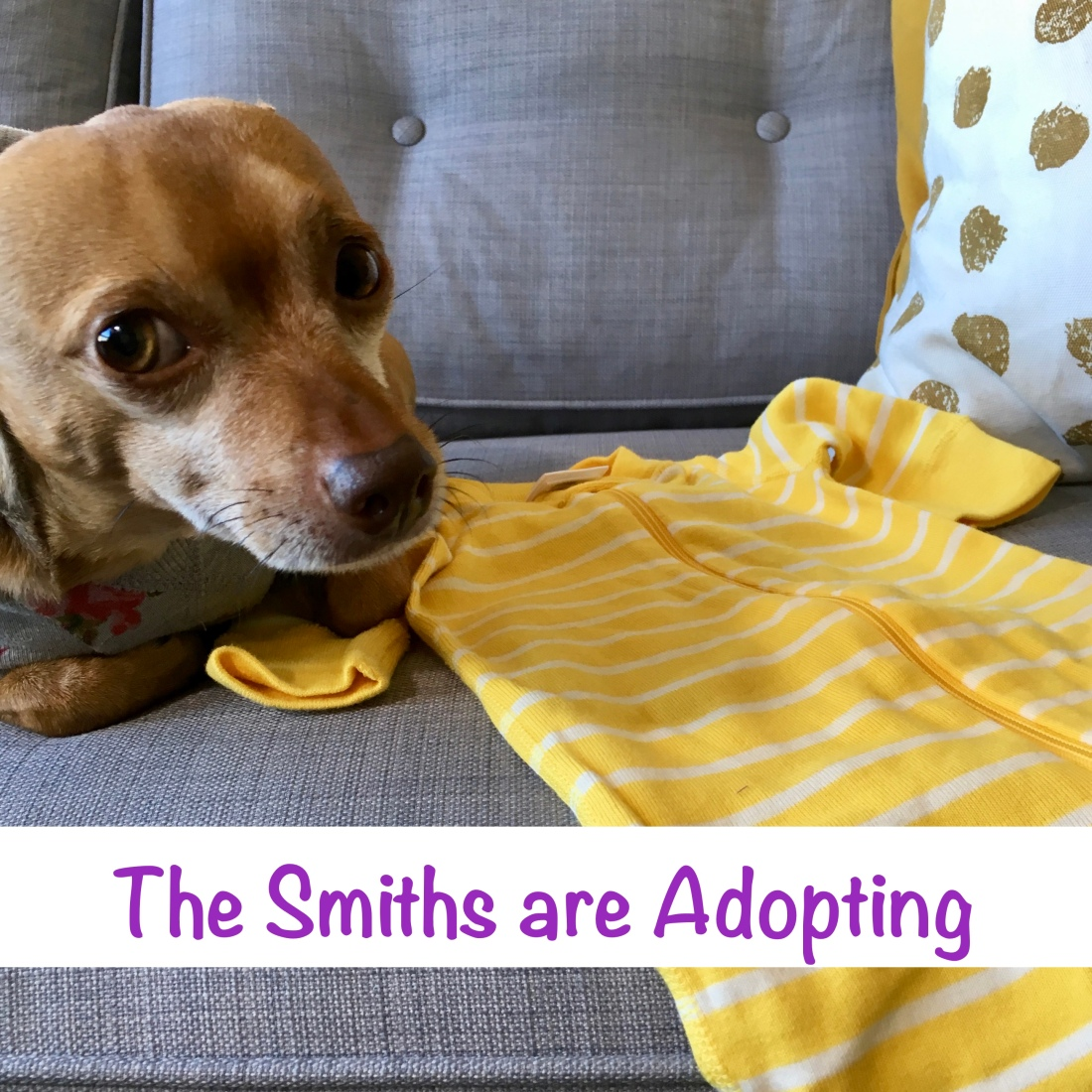 "Dog sitting next to a baby outfit with the text ""The Smiths are Adopting."""