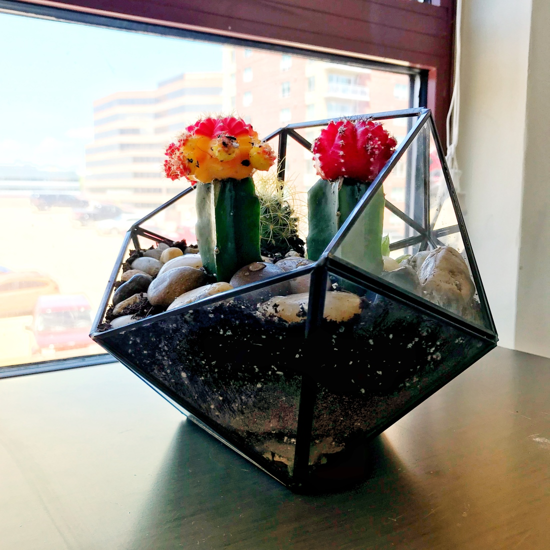 A glass planter with cacti planted in it.